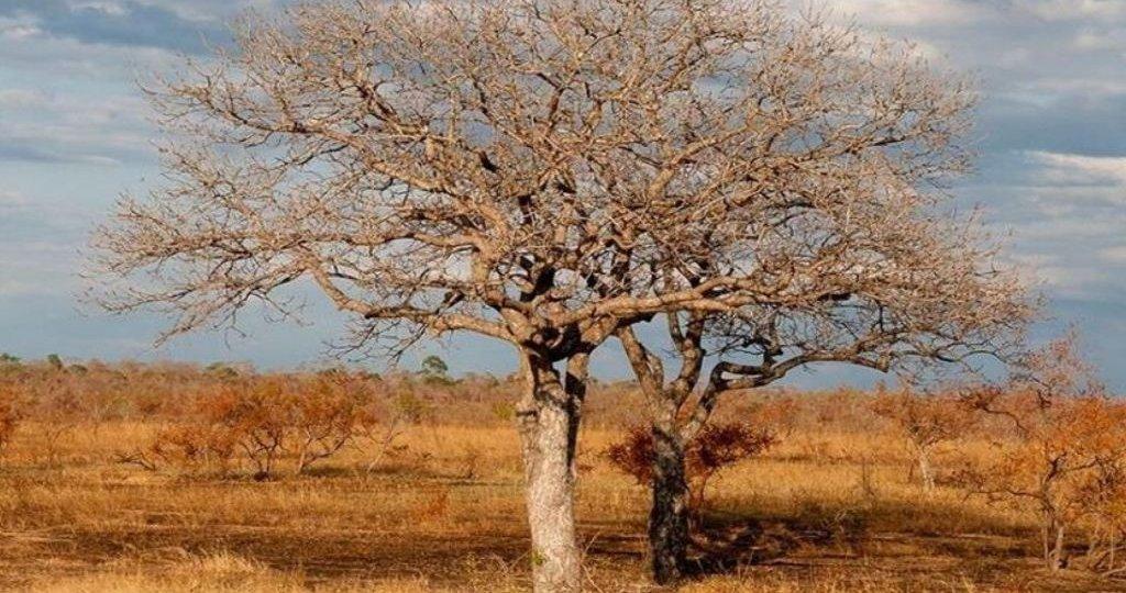 ZIMBABWE ELEPHANT HUNTING